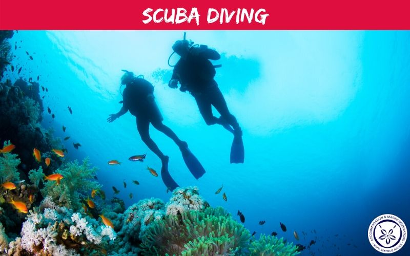 Scuba Diving Stay Moz Book Accommodation And Activities In Mozambique
