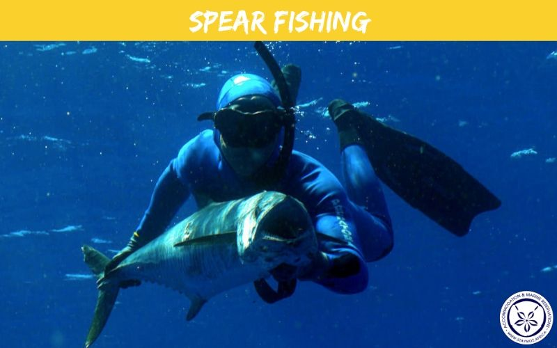 Spear Fishing Stay Moz Book Accommodation And Activities In Mozambique