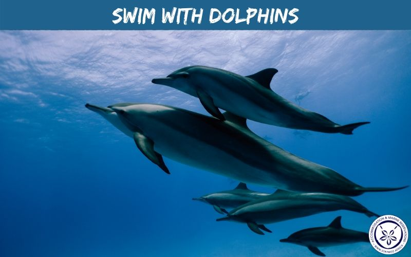 Swim With Dolphins Stay Moz Book Accommodation And Activities In Mozambique