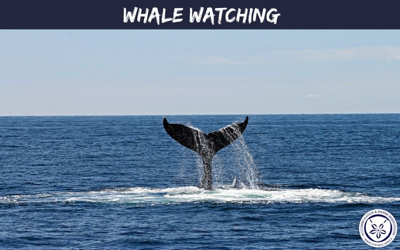 Whale Watching Stay Moz Book Accommodation And Activities In Mozambique