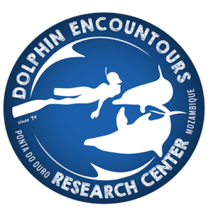 dolphin-encountours-ponta-do-ouro